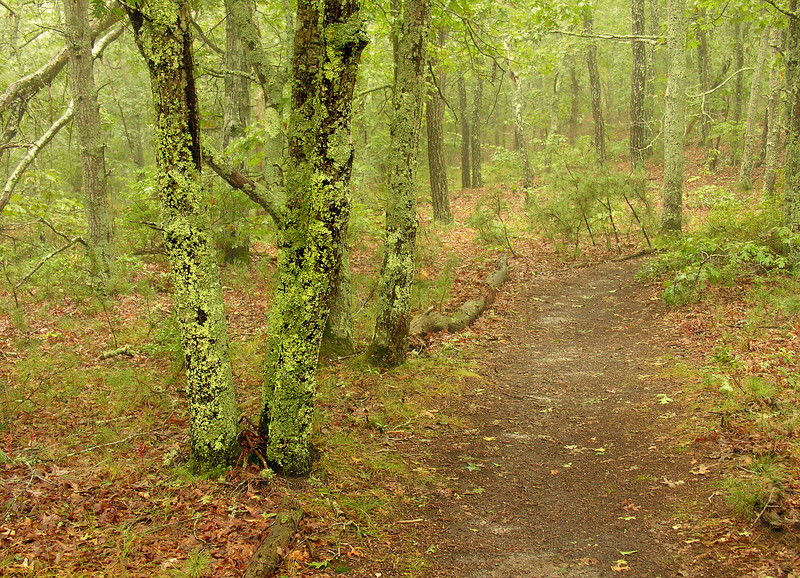 Wequasset Trail in the fog<br /> Cape Cod, MA