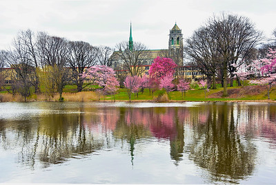 Cherry Blossom and Cathedral Zen