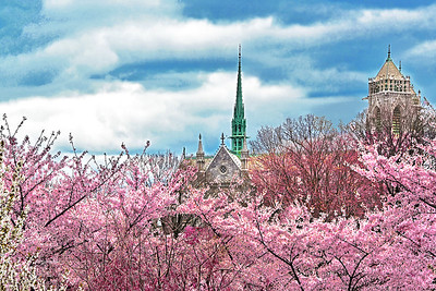 The Cathedral and the Cherry Blossoms