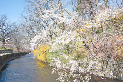Branch Brook Park Spring Landscape
