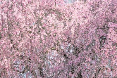Cherry Blossom Pink Mosaic