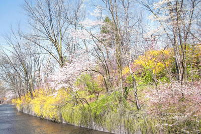 Spring Landscape Scene NJ