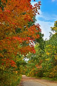 Fall Foliage NJ Palisades