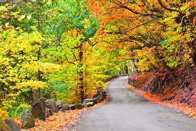 Winding Autumn Road NJ Palisades