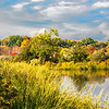 Mill Creek Marsh Fall Foliage