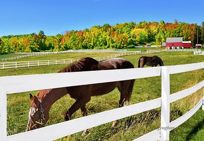 Autumn Farm Landscape