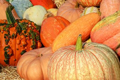 Pumpkin Plenty