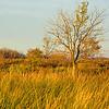 Wetland Grasses at Sundown