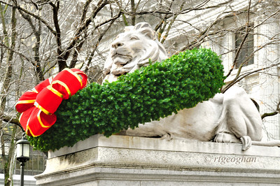 New York Public Library Lion Patience Christmas 2013