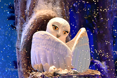 NYC Holiday Windows-Lord and Taylor Owl