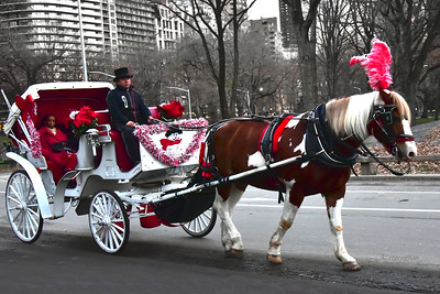 Central Park Holiday Horse and Carriage
