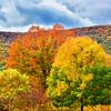 Bear Mountain Fall Foliage