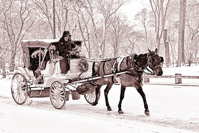 Central Park Snow Day -Horse and Carriage