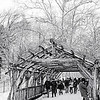 Snow and Wood and Vine tunnel Central  Park