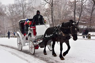 Central Park Snow Scene