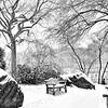 Central Park Snowfall Serenity