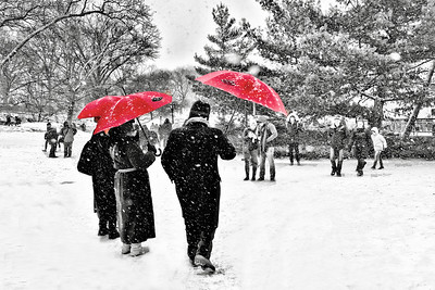 Central Park-Snow and Red Umbrellas