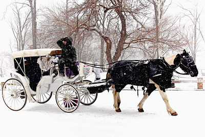 Central Park Snowfall Carriage Ride