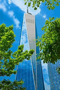 Tree-framed One World Trade Tower
