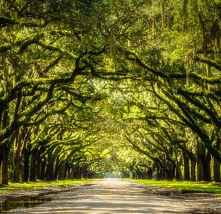 Wormsloe Plantation – Savannah, Georgia