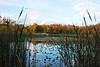 North Chagrin Autumn  1