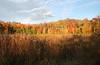 North Chagrin Autumn  4