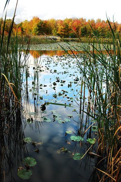 North Chagrin Autumn  2