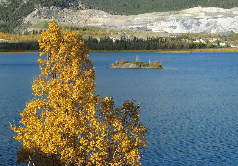 Golden aspen by wide span of Bow River<br /> Lac des Arcs, Alberta, Canada