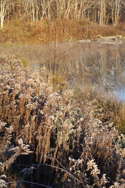 Marsh November Frost and Fog 3
