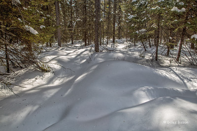 Snowscape, Algonquin Park, March 6 2016, Canon 6D, 24-105mm, 1/13sec, F16, ISO 50