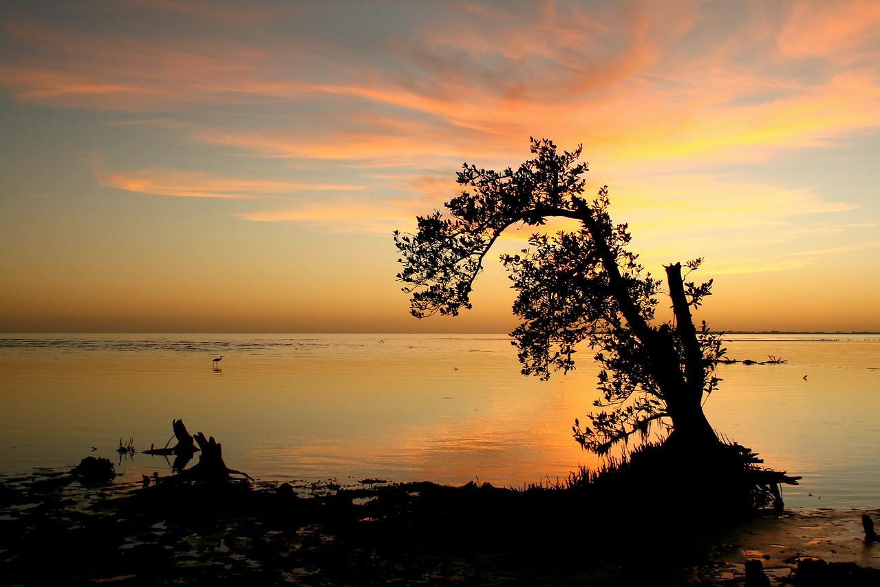 "Mangrove sunset silhouette - 1/15/2008<br /> Here's a couple of tips for the aspiring photographer ( myself included...) First, be patient and WAIT for the good shots. This one was taken after sunset and by then all the ""other"" photog's  had left the beach. I stuck around after realizing this tree would make a great subject and took a ton of different shots of it - Then I had to try and pick  the best one... <br /> Second, bring lots of insect repellant and use it! Of course I didn't, even though I had it packed in the car I was thinking ""oh this is just a quick two minute trip down the beach"". Yeah, until you see something cool to shoot and decide to stick around. The no-seeums were brutal!<br /> - See original photo in my ""Scenic"" gallery"