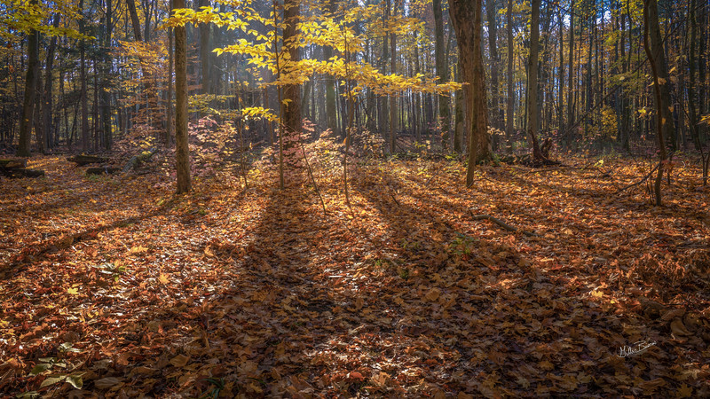 Fall landscape, Presqu'ile Provincial Park, October 23, 2020, Sony A7RIV, 24-105mm, 1/20 sec, F13, ISO 64