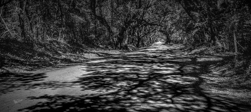 Botany Road shadows