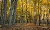Landscape, Presqu'ile Provincial Park, October 27,2015, Canon 6D, .5 sec, F18.0, ISO50