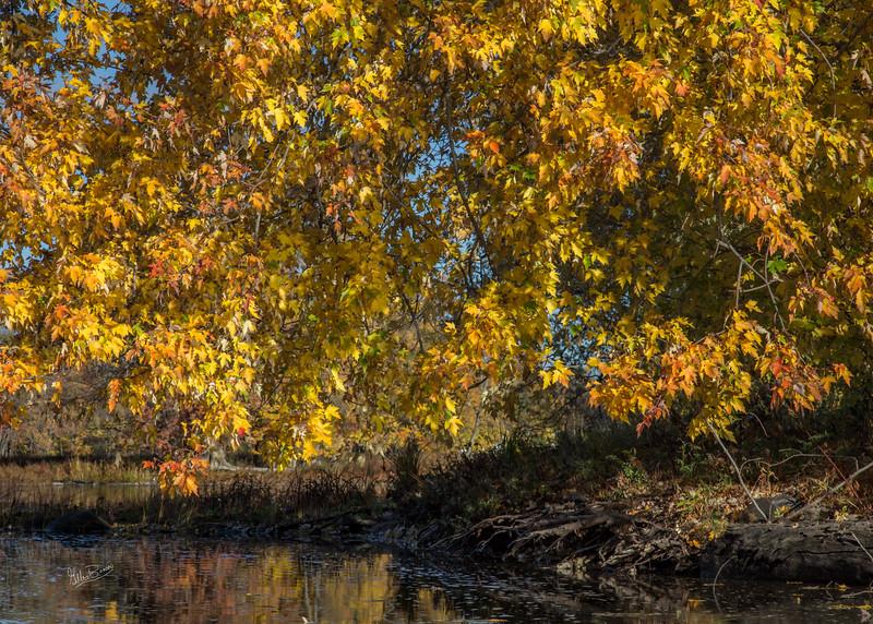 Yellows of Fall