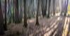 Abstract 3 - Vanderwater