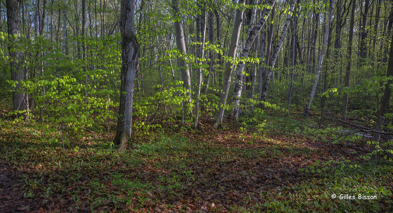 Spring Landscape, May 15 2014, Beaver Meadow, Canon 6D,24-105mm,1/6,F11,ISO50