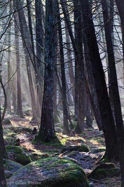 Forest Scenery, Dec 22 2011, Vanderwater Conservation Area