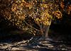 Sandbanks Provincial Park, October 14, 2020, sony AR7IV, 24-105mm, 1/8 sec, F11, ISO 50