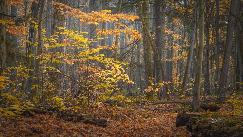 Fall landscape, Presqu'ile Provincial Park, October 23, 2020, Sony A7RIV, 24-105mm, 1/5 sec, F13, ISO 64