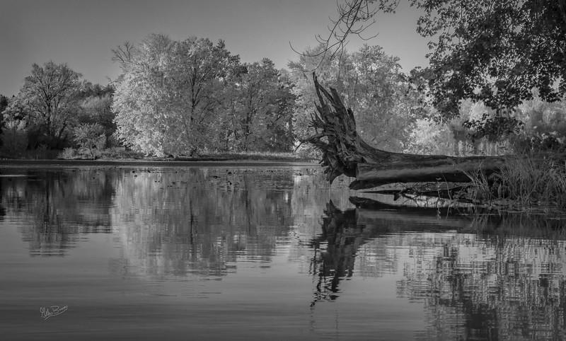 B&W Moira River