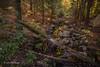 Landscape, Beaver Pond Trail, Algonquin Park, Canon 6D-3.2sec-F11-ISO50-LR5