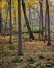 Landscape, Presqu'ile Provincial Park, October 27,2015, Canon 6D, 3.2 sec, F18.0, ISO50