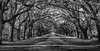 Oak lined entry to the Wormsloe Historic Site, Savannah Georgia, April 10 2017, Canon 6D, 65mm, 1/50, F13, ISO 400