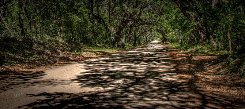 Botany road shadows, South Carolina, April 11, 2017, Canon 6D, 1/250, F16, ISO 250