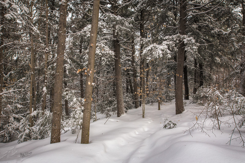 Snowy landscape, Hemlock Bluff trail, Algonquin Park, March 2, 2017, Canon 6D, 20mm, 1/40, F9, ISO 320