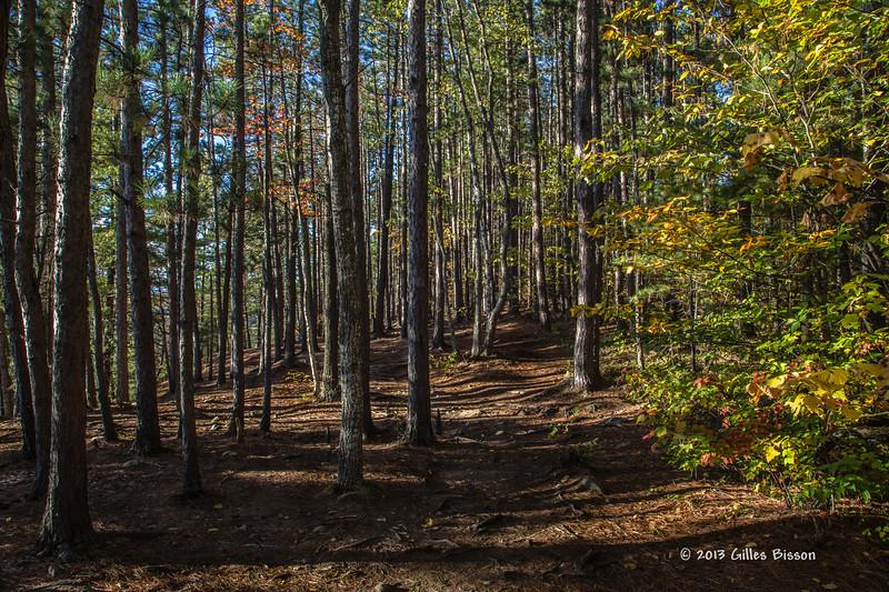 Lookout Trail, Algonquin Park, Sept 26 2013, #8056, Canon 6D-.4sec-F14-ISO50-LR5