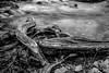 Shoreline landscape, Healy Falls, January 21, 2017, Canon 6D, 47mm, .5sec, F18, ISO 50