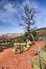 Sedona Landscape, #2954, March 17 2014, Canon 6D, 1/200 F8 ISO100