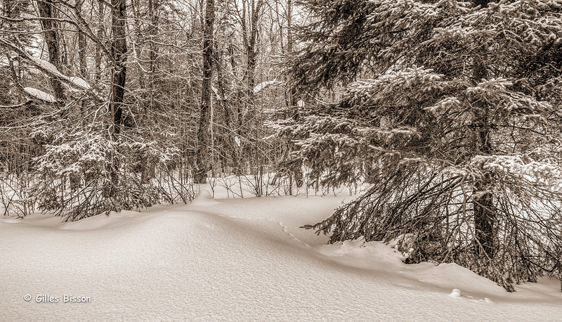 Snowscape, Monochrome,Algonquin Park,East Beach area, March 07 2015, Canon 6D, 1/100,F9.0,ISO125
